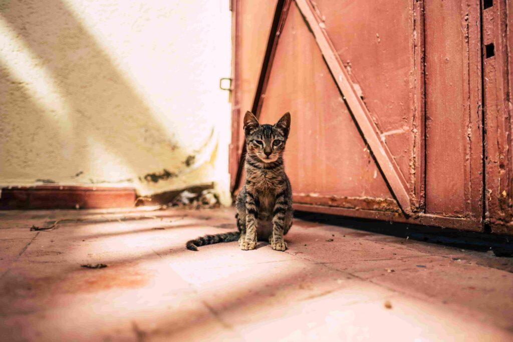 Een kattenluik waar alleen jouw kat door naar binnen kan
